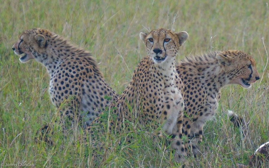 East African Wildlife (What To Look Out For On Safari)