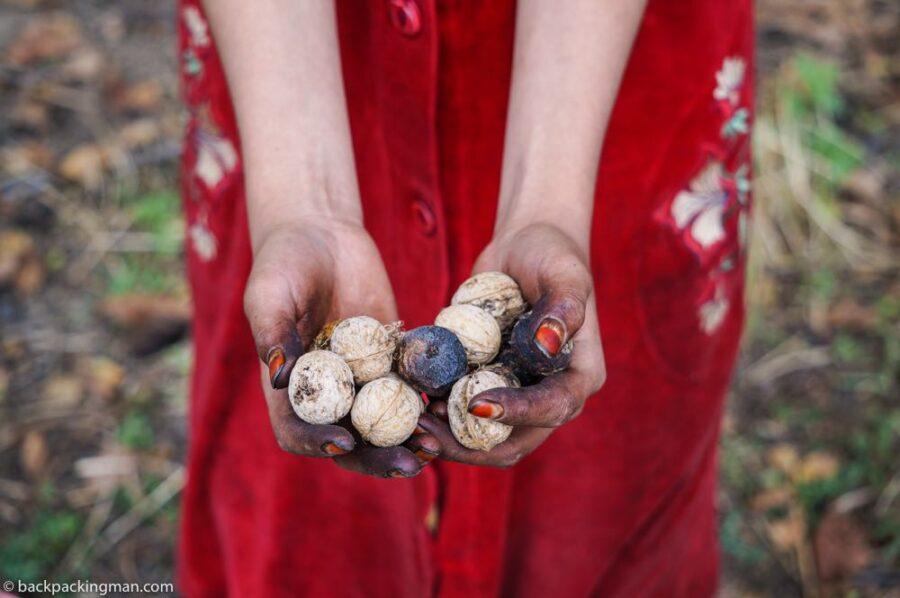 Arslanbob walnuts