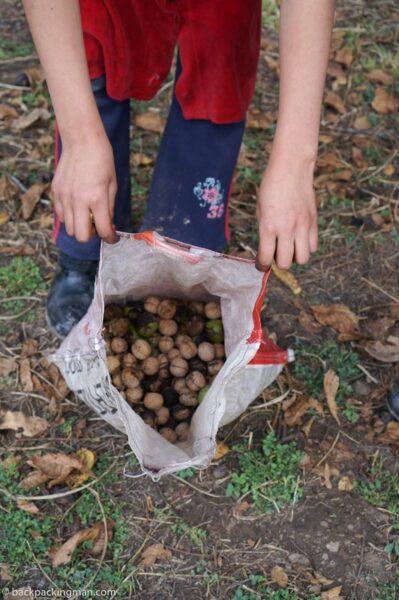walnuts Kyrgyzstan