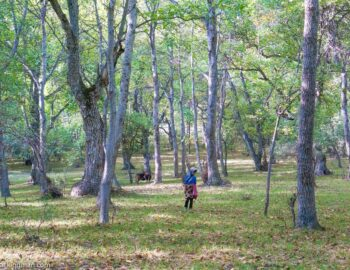 Arslanbob - Enter The Fairytale Walnut Forest of Kyrgyzstan