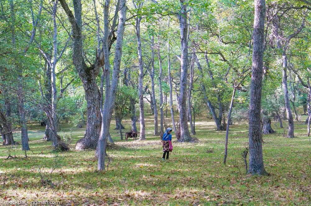 Arslanbob – Enter The Fairytale Walnut Forest of Kyrgyzstan