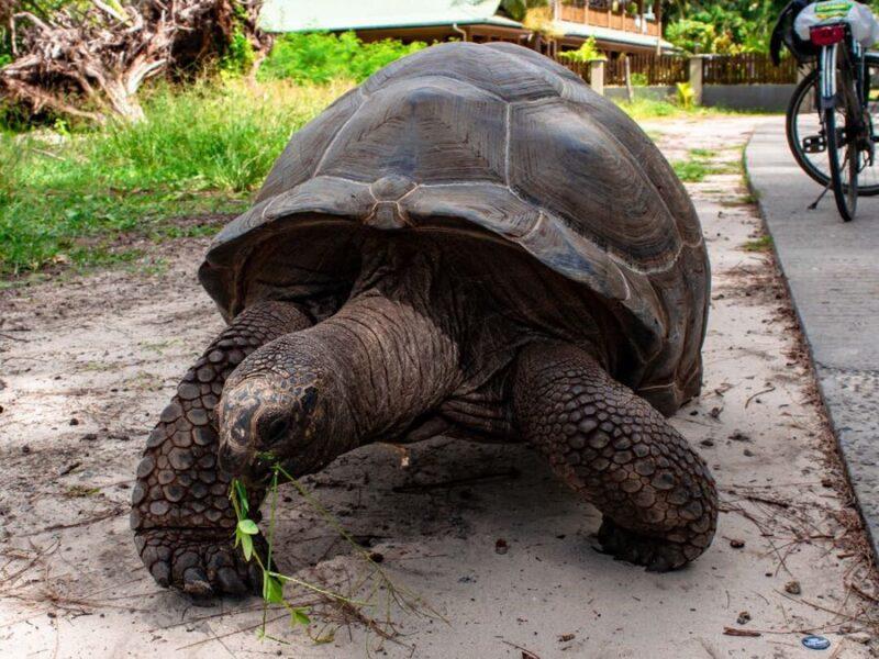 Seychelles wildlife