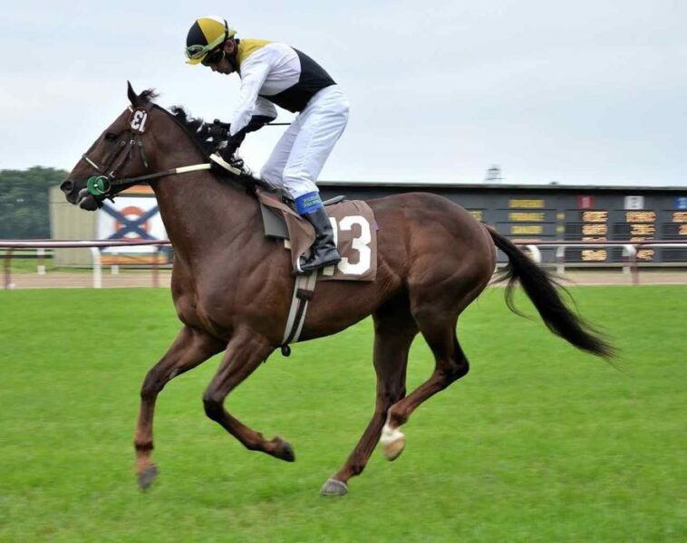 horse racing - things to do in Buenos Aires