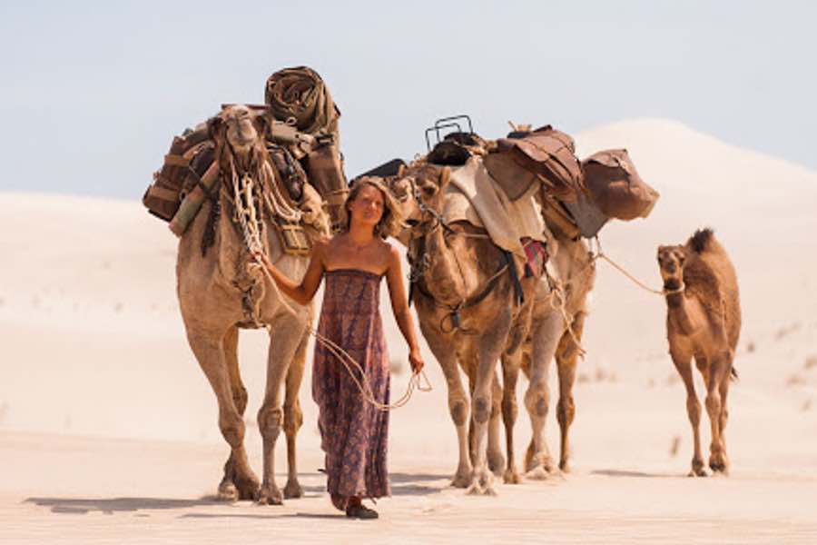 woman trekking with camels.
