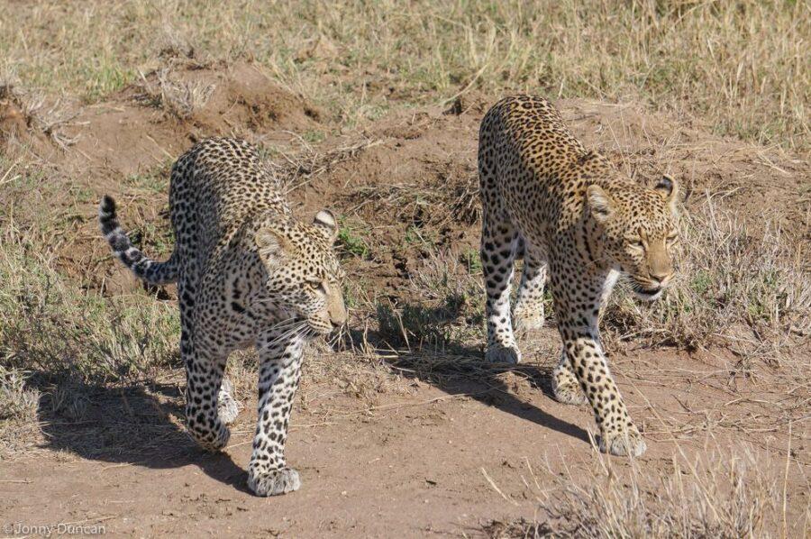 east Africa-safari