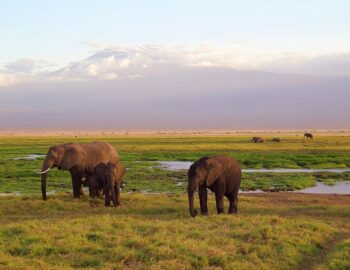 10 Best Countries To Visit In Africa